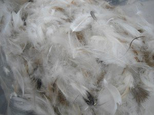 Picture of Feather & Down Filling